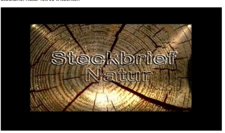 Steckbrief Wildenten
